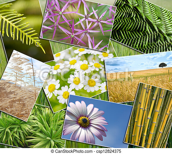 Natural Green Environment Plants Field Flowers Montage - csp12824375