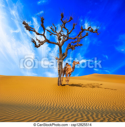 Desert conceptual background. Lonely tree and camel in surrealistic sandy environment - csp12825514