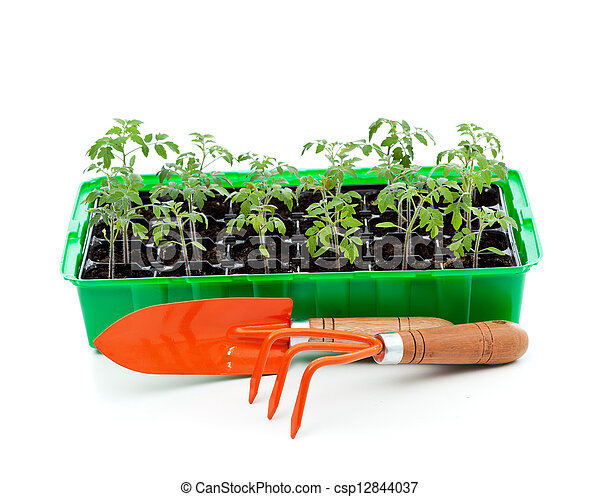Seedlings in germination tray with gardening tools - csp12844037