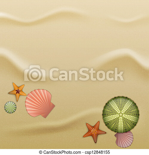 Seashells on sand, background - csp12848155
