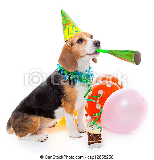 dog party animal - csp12858256