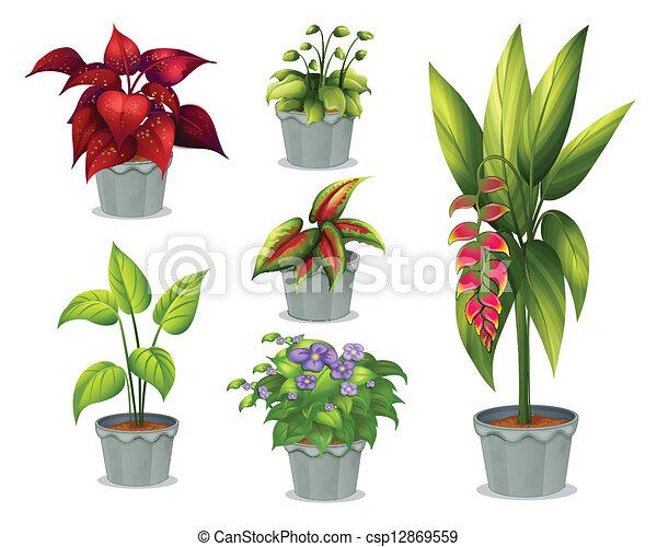 Clipart vector of six ornamental plants illustration of - Plantas ornamentales de interior ...