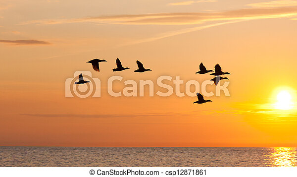 Birds flying in the sky at sunset - csp12871861