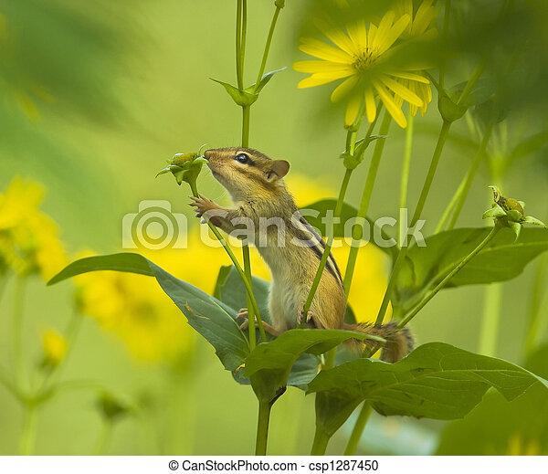 pequeno, natureza, amante - csp1287450