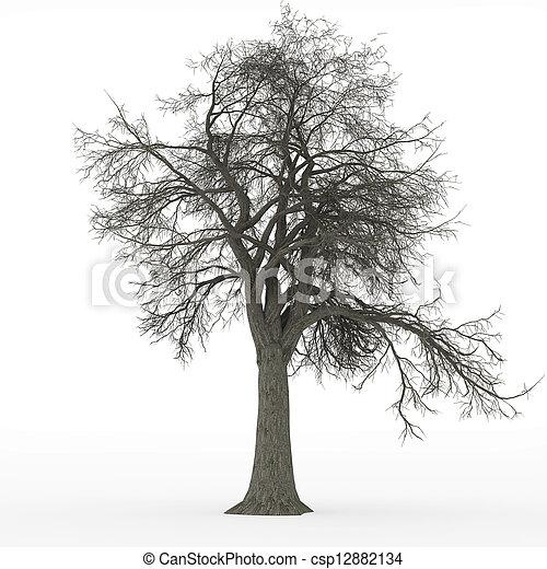 Photos de cendre arbre sans feuilles csp12882134 - Arbres sans feuilles ...