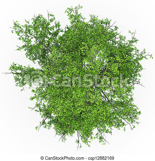 topo, cinza, árvore - csp12882169