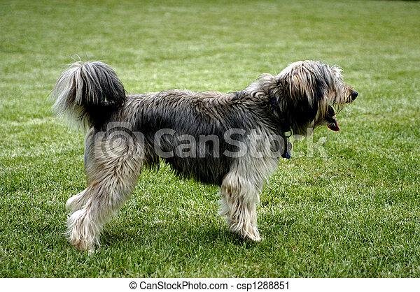 Smiling dog - csp1288851