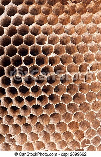 Detail of a empty hornet nest - csp12899662