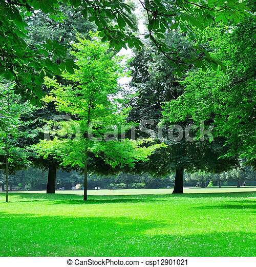 summer park with beautiful green lawns - csp12901021
