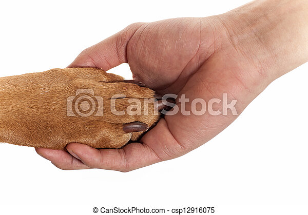 dog paw in human hand - csp12916075