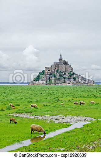 Sheep drinking and other grazing near Mont Saint Michel landmark. Normandy, France, Europe. - csp12920639
