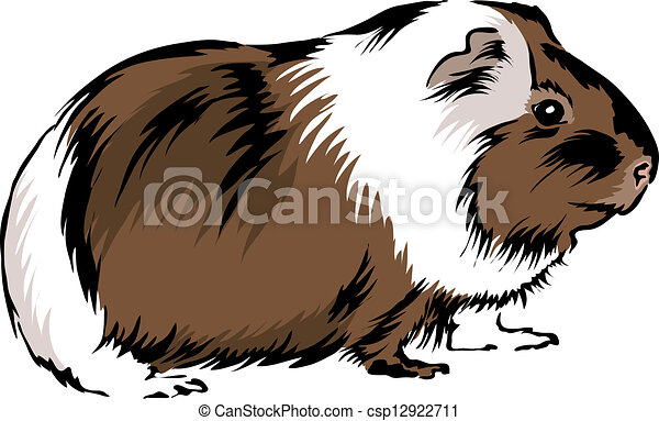 Clip Art Guinea Pig Clip Art guinea pig clip art and stock illustrations 393 eps sitting on bottom looking curious