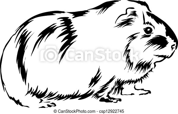 Clip Art Guinea Pig Clip Art guinea pig clip art and stock illustrations 393 eps looking around clipartby paganin4168 sitting on bottom curious