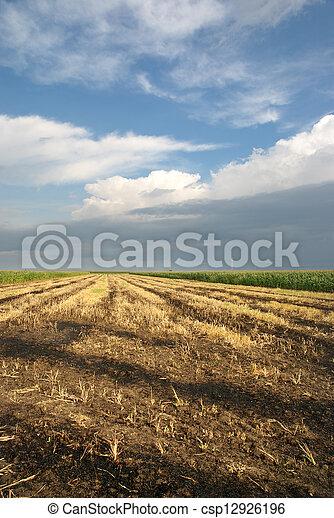 Agriculture - csp12926196