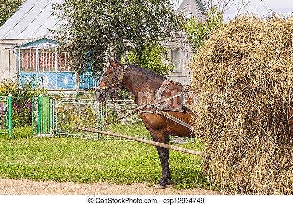 One horse transportation hay on wooden cart - Ukraine. - csp12934749