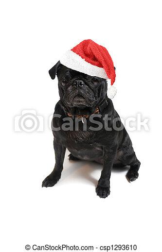 stock fotografie von weihnachten mops festlicher. Black Bedroom Furniture Sets. Home Design Ideas
