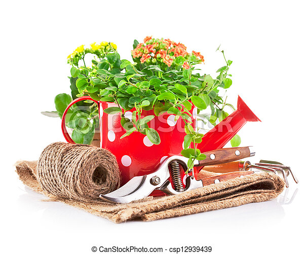 green plants in red watering can with garden tool - csp12939439