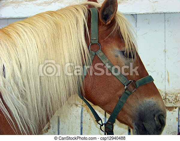 Brown Horse With White Mane