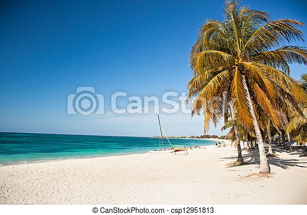 turquesa, caraíbas, cuba, ilha, sobre, paraisos , -, árvores, águas, impressionante, palma, penduradas, praia branca, arenoso - csp12951813