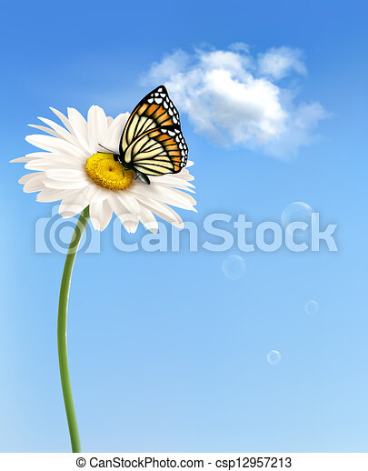 Nature spring daisy flower with butterfly.  Vector illustration.  - csp12957213