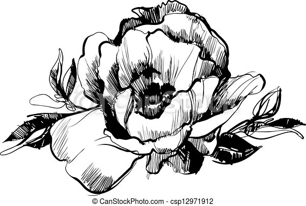 clip art vecteur de croquis fleur bourgeon pivoine a croquis de csp12971912. Black Bedroom Furniture Sets. Home Design Ideas