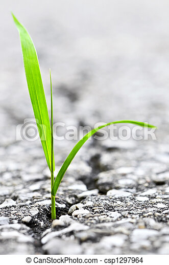 Grass growing from crack in asphalt - csp1297964