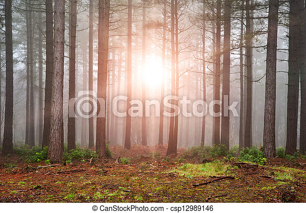 Landscape of forest with dense fog in Autumn Fall with sun bursting through trees - csp12989146
