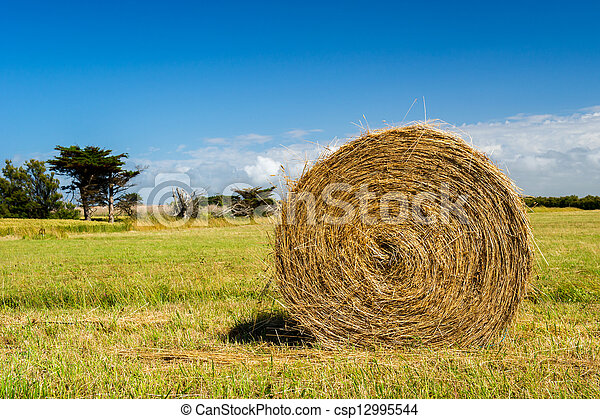 Bale hay in agriculture landscape - csp12995544
