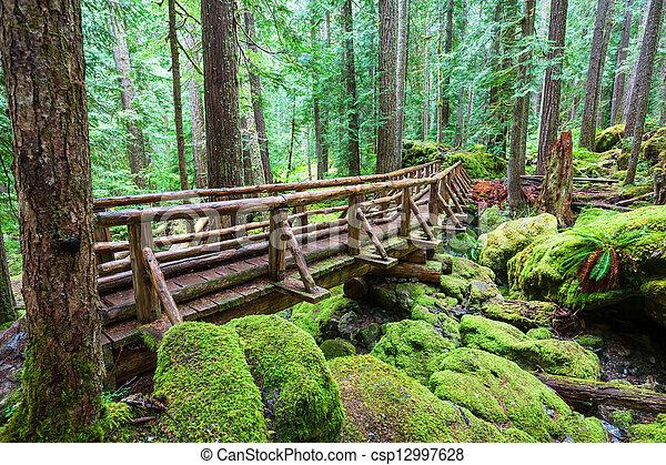 Rain forest - csp12997628