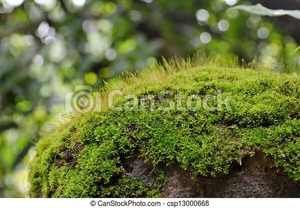 Tropical Highland Forest Tropical Highland Forest