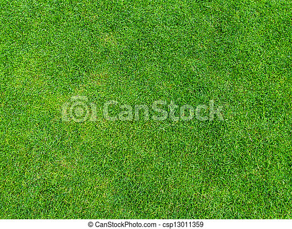 Green grass texture from golf course for background