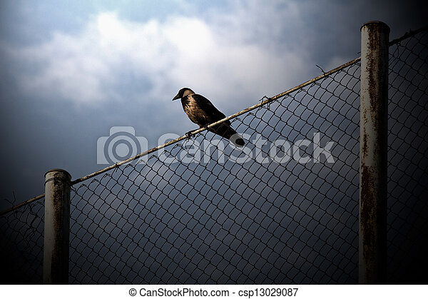 Bird on wire - csp13029087