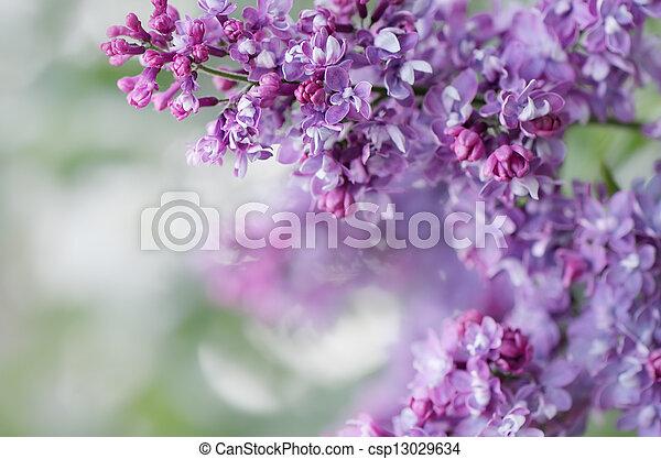 Spring flowers - csp13029634