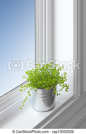 Green plant on a window sill - csp13032029