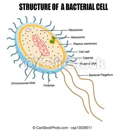cell - stock illustration, royalty free illustrations, stock clip art ...