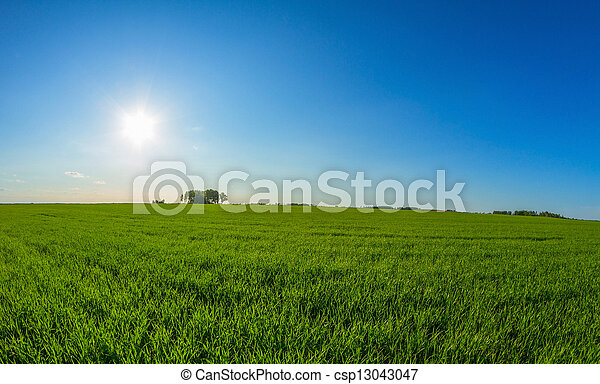 spring landscape and sun