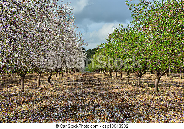 Green and white almond trees