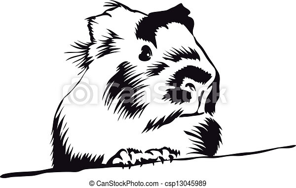 Clip Art Guinea Pig Clip Art guinea pig clip art and stock illustrations 393 eps looking around