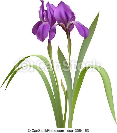 clip art vector of purple iris flowers isolated on white Flour De Lis Mardi Gras Fleur De Lis Clip Art