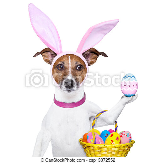 funny easter dog - csp13072552