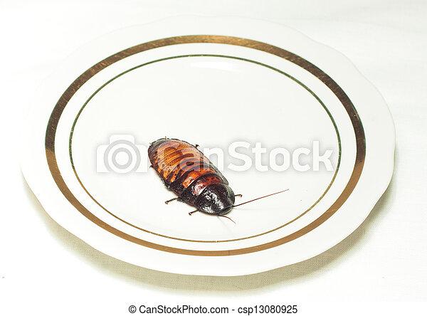 photo de plaque cafard blanc blanc plaque cafard blanc fond csp13080925 recherchez des. Black Bedroom Furniture Sets. Home Design Ideas