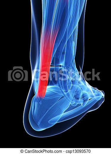 Achilles tendon - csp13093570