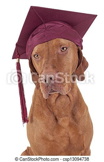 graduation dog - csp13094738