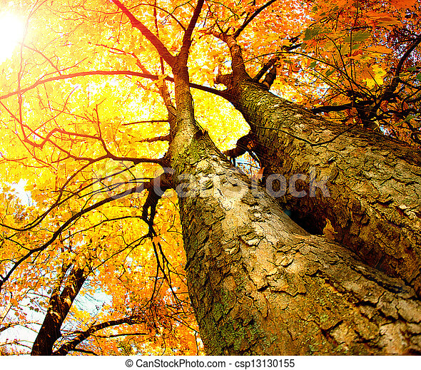 Autumn Trees. Fall  - csp13130155