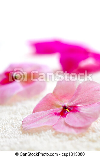 Gentle flower on luxury towel - csp1313080