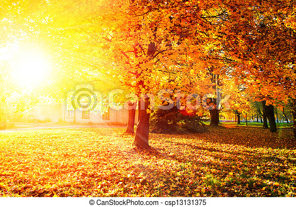 Fall. Autumnal Park. Autumn Trees and Leaves - csp13131375