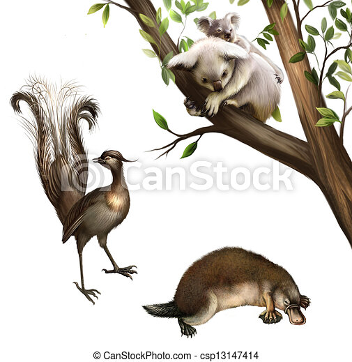 Australian Wildlife Drawings Australian Animals Koala