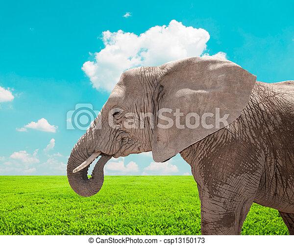 Portrait of huge African elephant in nature - csp13150173