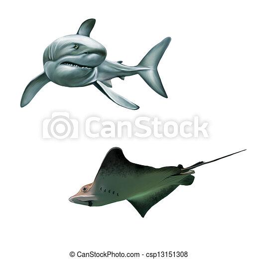 Stock Illustration - Shark and fish stingray - stock illustration ...