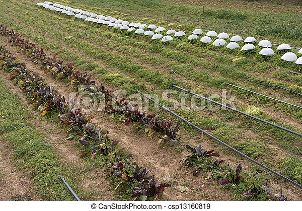 organische, landwirtschaft - csp13160819